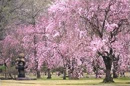 loveliest of trees poem